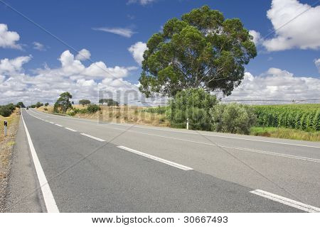 Empty countryside road among trees and fields at summer day (Freedom concept)