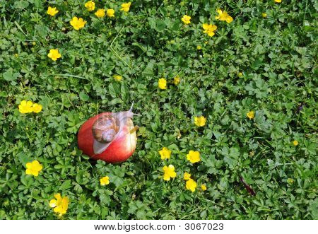 Snail On The Red Apple