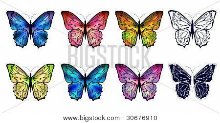 Conjunto de mariposa