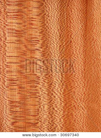 Platanus (wood texture)