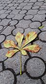 Chestnut Leaf Branch On Ground Tiles With Geometric Circles Pattern. Brown And Green Colors Leaves O poster
