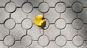 Lonely Maple Leaf On Ground Tiles With Geometric Circles Pattern. Bright Yellow Autumn Leaf On Grey  poster