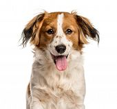 Mixed-breed dog looking at camera against white background poster