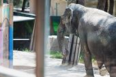 Poor Elephant In The Zoo Over The Glass In The Small Enclosure. poster