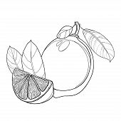 Vector Outline Lemon Or Lime Slice And Whole Fruit And Leaf In Black Isolated On White Background. C poster
