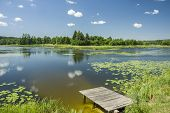 Wooden Small Bridge And Floating Lotus Flower Leaves In The Lake, Forest On Horizon And White Clouds poster