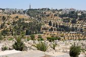 stock photo of ascension  - Mount of Olives and the Russian Orthodox Tower and Church of the Ascension - JPG