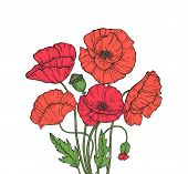 Poppy Bouquet. Red Poppies Flower Meadow Garden Flowers Decorative Plant Poppy Bud Planting Floral A poster