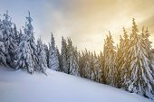 Beautiful Winter Mountain Landscape. Tall Dark Green Spruce Trees Covered With Snow On Mountain Peak poster
