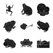 Isolated Object Of Fauna And Reptile Symbol. Collection Of Fauna And Anuran Vector Icon For Stock. poster