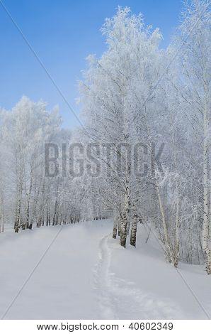 severe winter