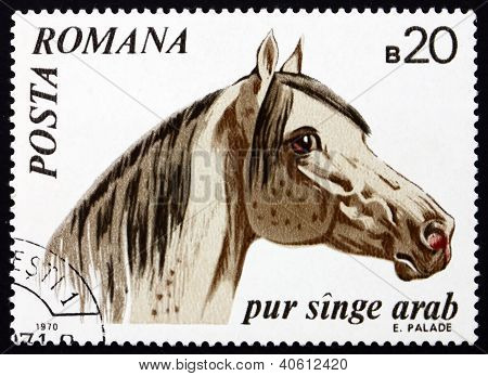 Postage stamp Romania 1970 Arabian Thoroughbred, Horse