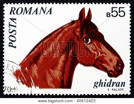 Postage stamp Romania 1970 Ghidran, Horse
