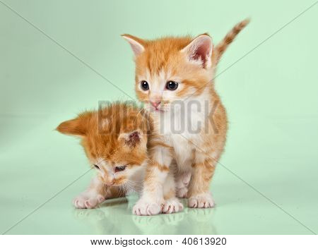 Two Ginger Kittens On A Green Surface