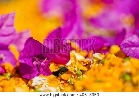 Purple Flower With Shallow Dept Of Field