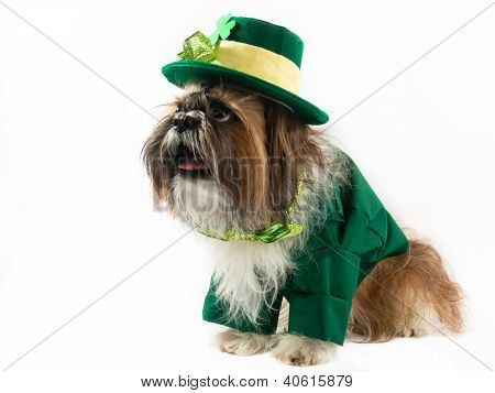 St Patrick's Day Dog