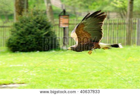 Flight Of Eagle
