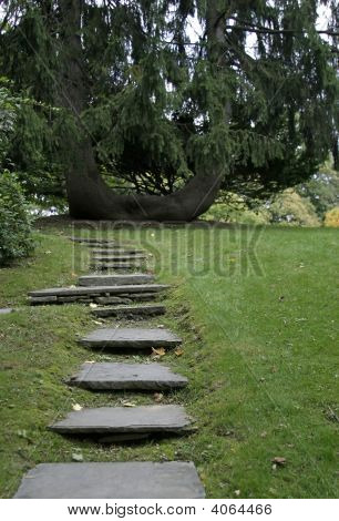 Slate Stepping Stones And Forked Tree