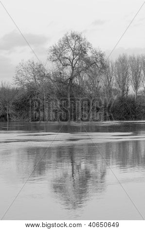 Flooded River And Tree Reflection In France (black And White)