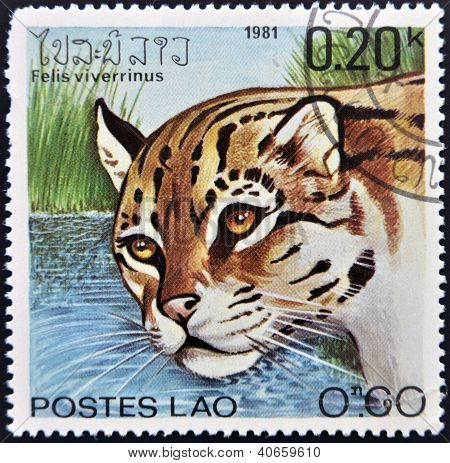LAOS - CIRCA 1981: A stamp printed in Laos shows a Felis viverrinus circa 1981