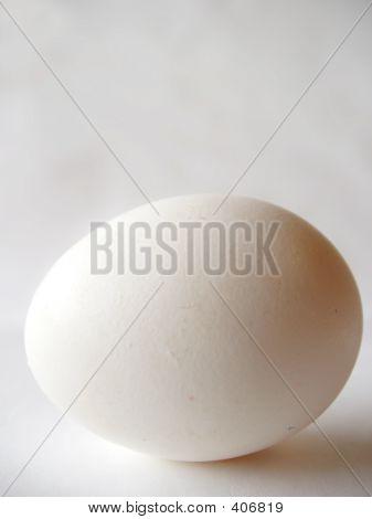 Egg Vert