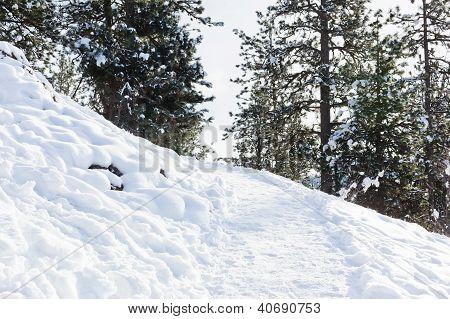 Winter Hiking Trail