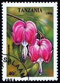 foto of lyre-flower  - a stamp printed in the Tanzania shows Old - JPG