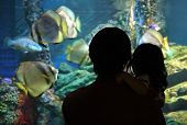 father and child in aquarium