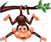 stock photo of ape  - Vector illustration of funny monkey hanging isolated on white - JPG