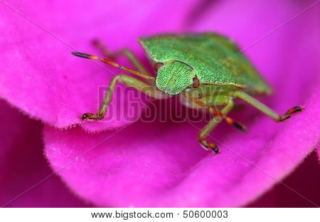 small bug on a flower.