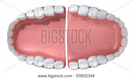 Open False Human Teeth Extreme Closeup