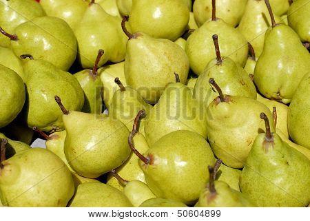 Freshly Picked Green Pears