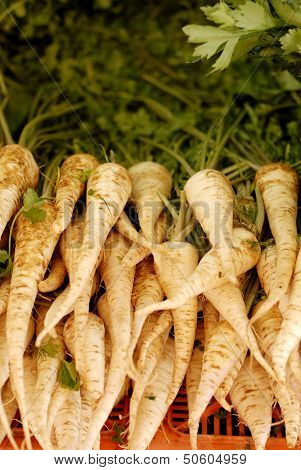 Whole Raw Parsnips For Sale