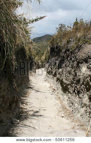 Hiking Trail Through a Gully