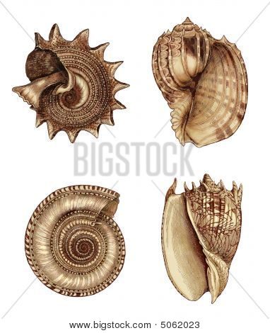 Shell Assortment 1