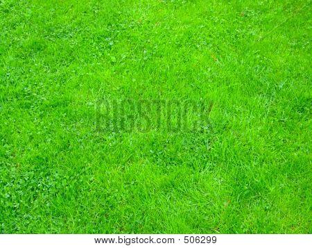 Regelmatige gras