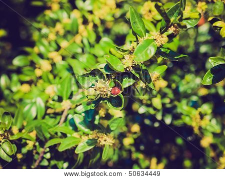 Retro Look Beetle Picture