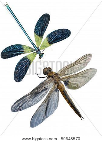 Dragonfly insects it is isolated