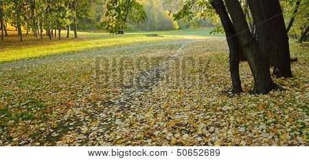 Autumn In Park
