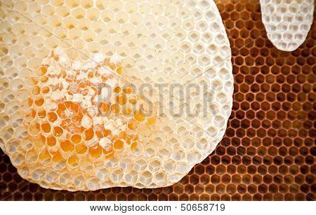 Fresh Honeycomb Background Texture