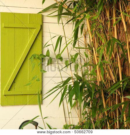Bamboo Growing Alongside A House