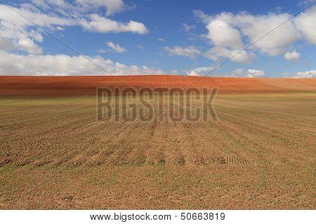 Tilling Field in Tierra de Campos.