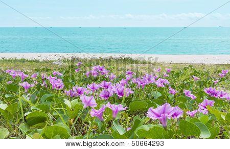 Ipomoea On A Beach