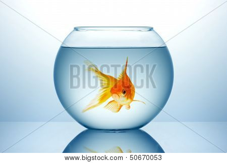 Fish Bowl With Gold Fish