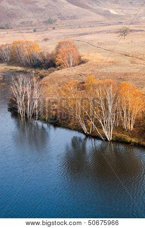 Autumn Birch Trees In Waterside