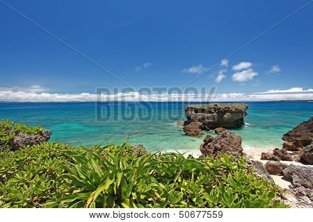 Blue sky and subtropical plants of Okinawa