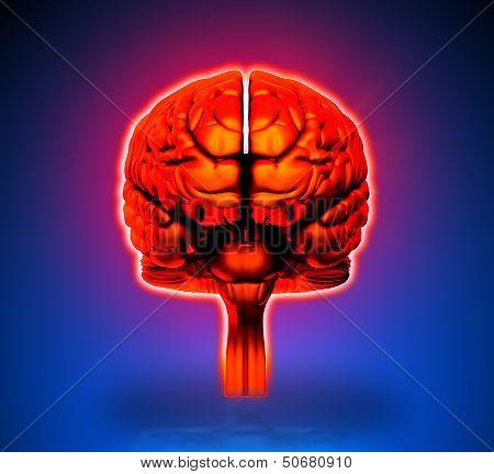Brain - Internal organs - blue background