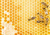 stock photo of honeycomb  - Working bees on honeycomb full of sweet honey - JPG