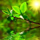 Leaves Sun Water