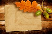 picture of acorn  - Old grunge paper with autumn oak leaves and acorns on the abstract background - JPG